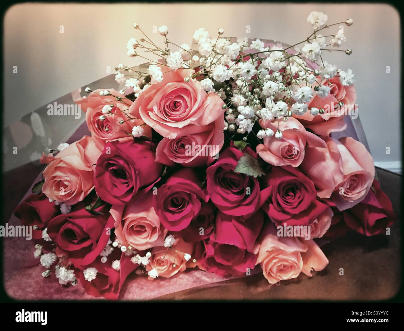 Lovely pink and red roses for Mothers Day or Valentines Day or for spring and summer happiness. - Stock Image