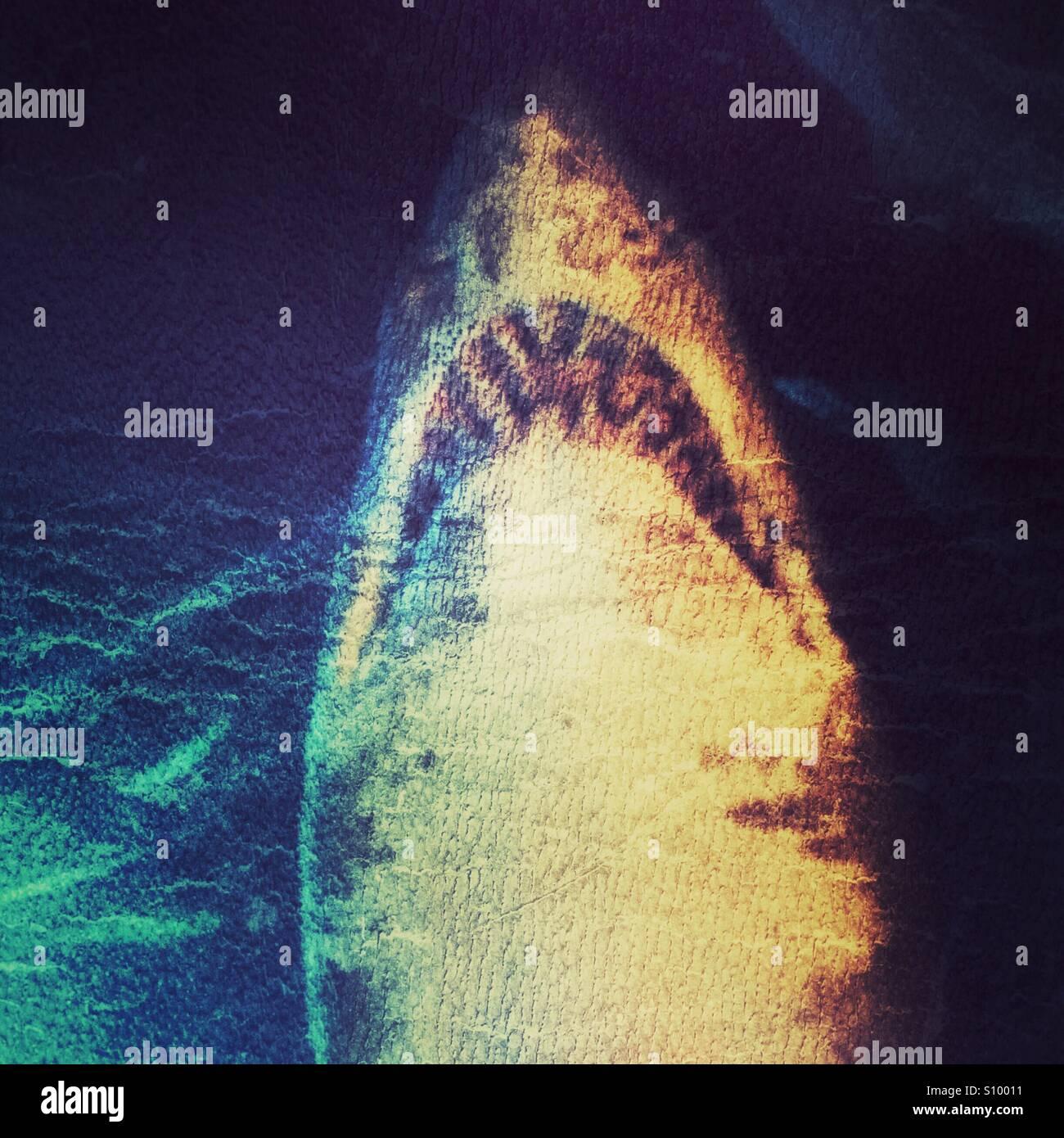 Hungry Shark - Stock Image