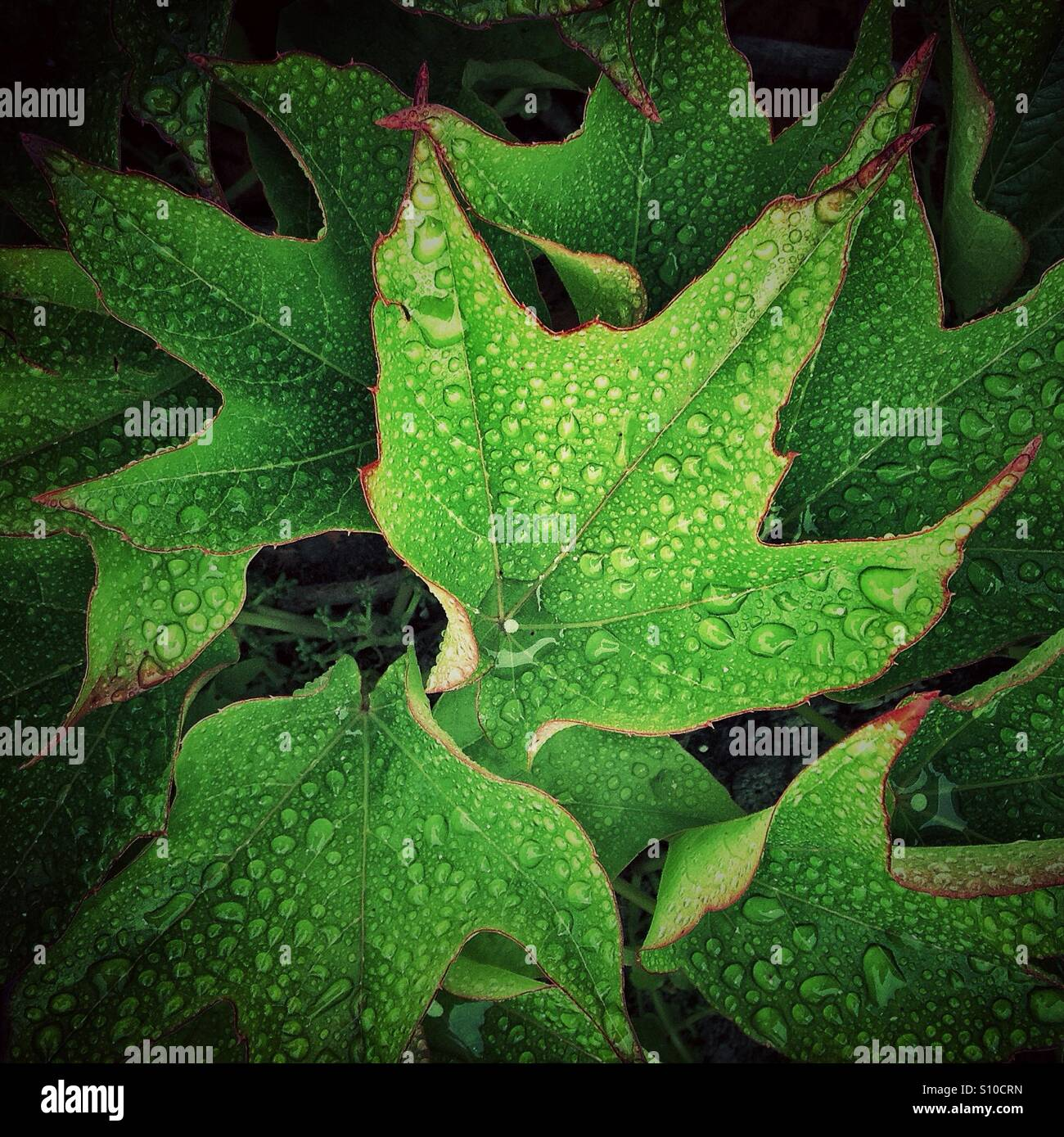 Green leaves with rain drops of waterStock Photo