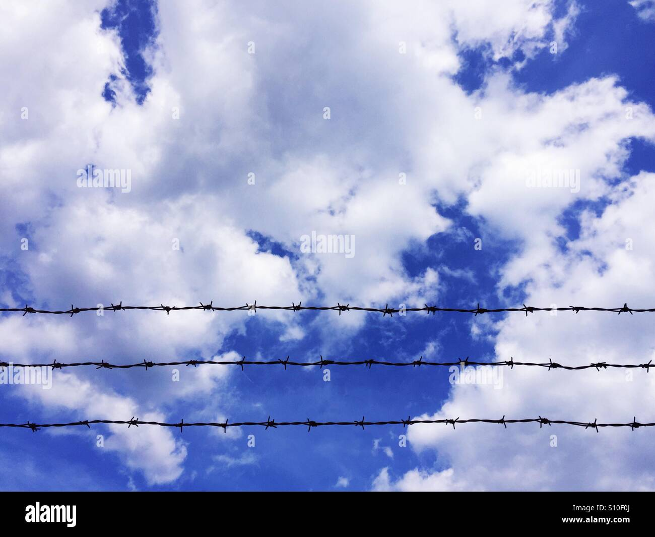 Barbed wire on cloudy sky background - Stock Image