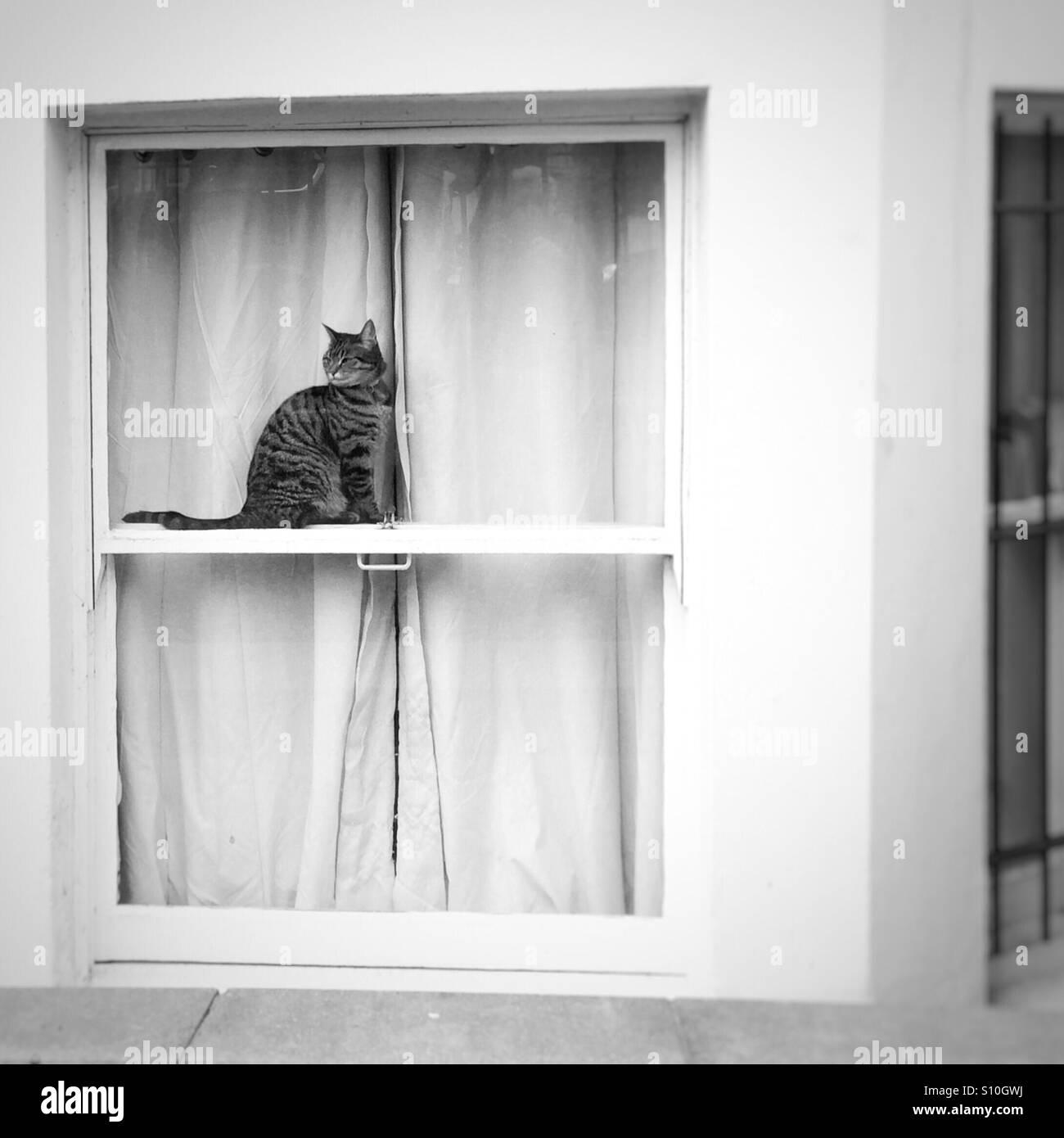 Notting Hill Cat - Stock Image