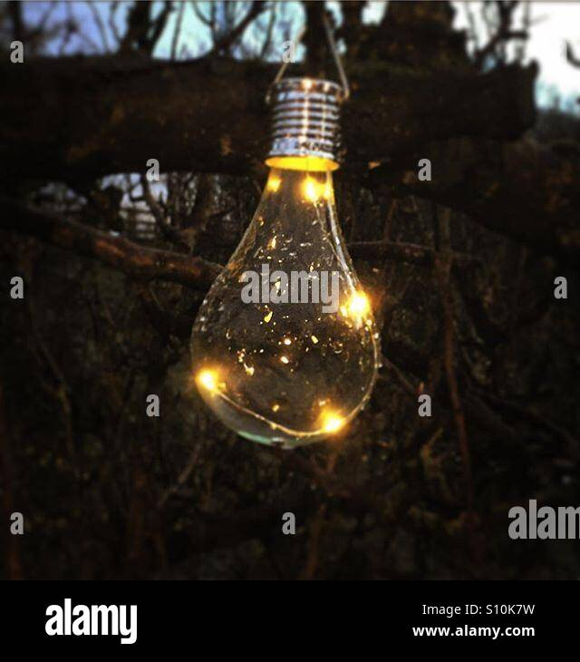 A solar-powered lightbulb hanging on a tree - Stock Image