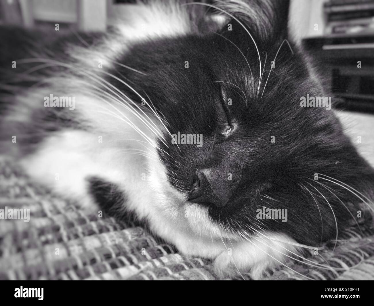 Snoozing cat - Stock Image