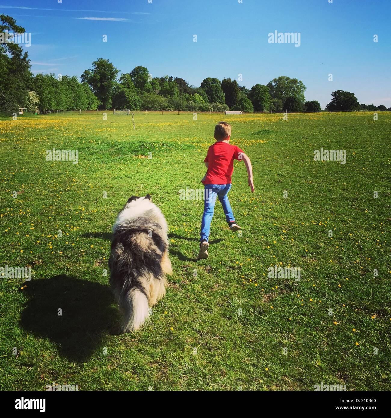 boy-and-dog-running-through-a-buttercup-