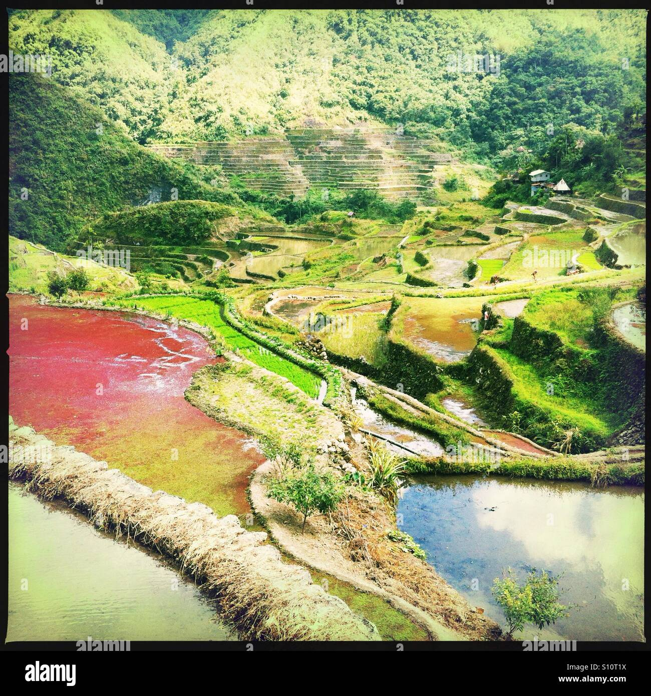 Batad rice terraces, Banaue, Ifugao Province, Northern Luzon, Philippines - Stock Image