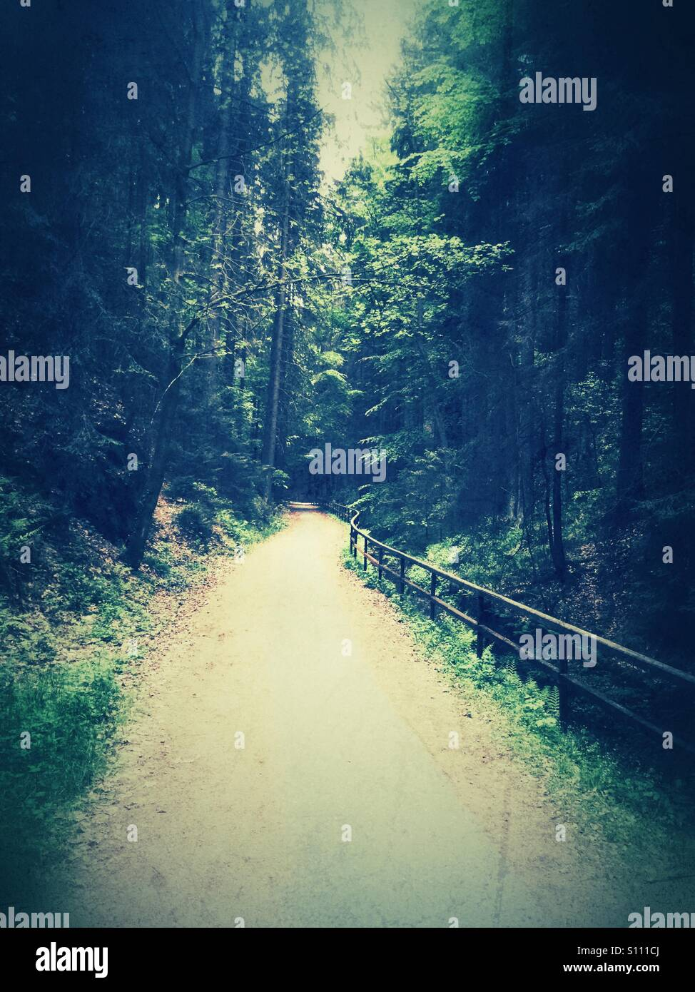 Path in the woods - Stock Image
