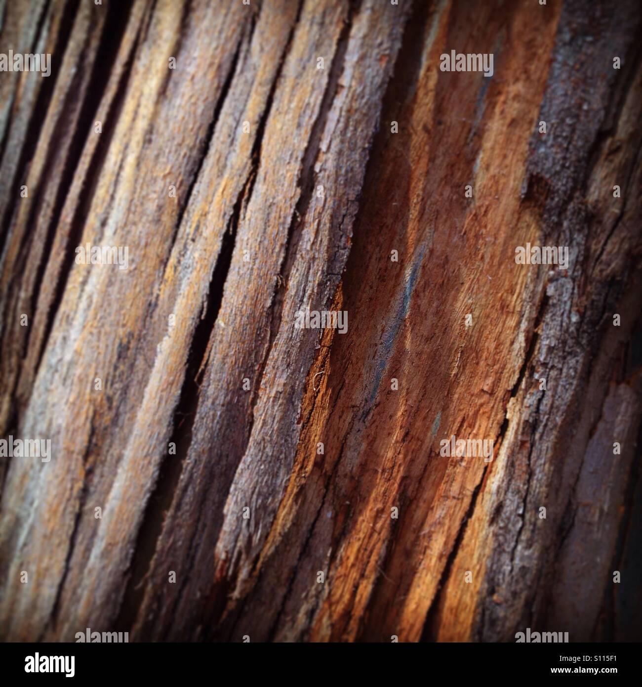 Eucalyptus bark - Stock Image
