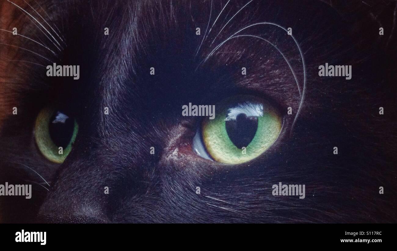 Cats eyes - Stock Image
