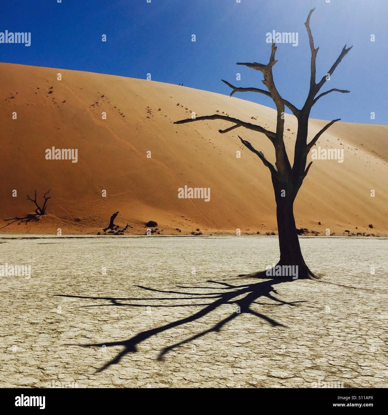 Desert Tree, Deadvlei, Namibia - Stock Image