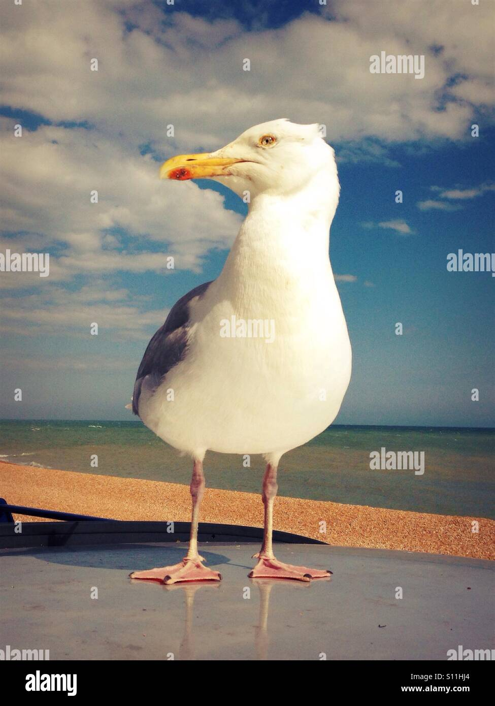 Seagull perching on top of a car parked by the beach Stock Photo