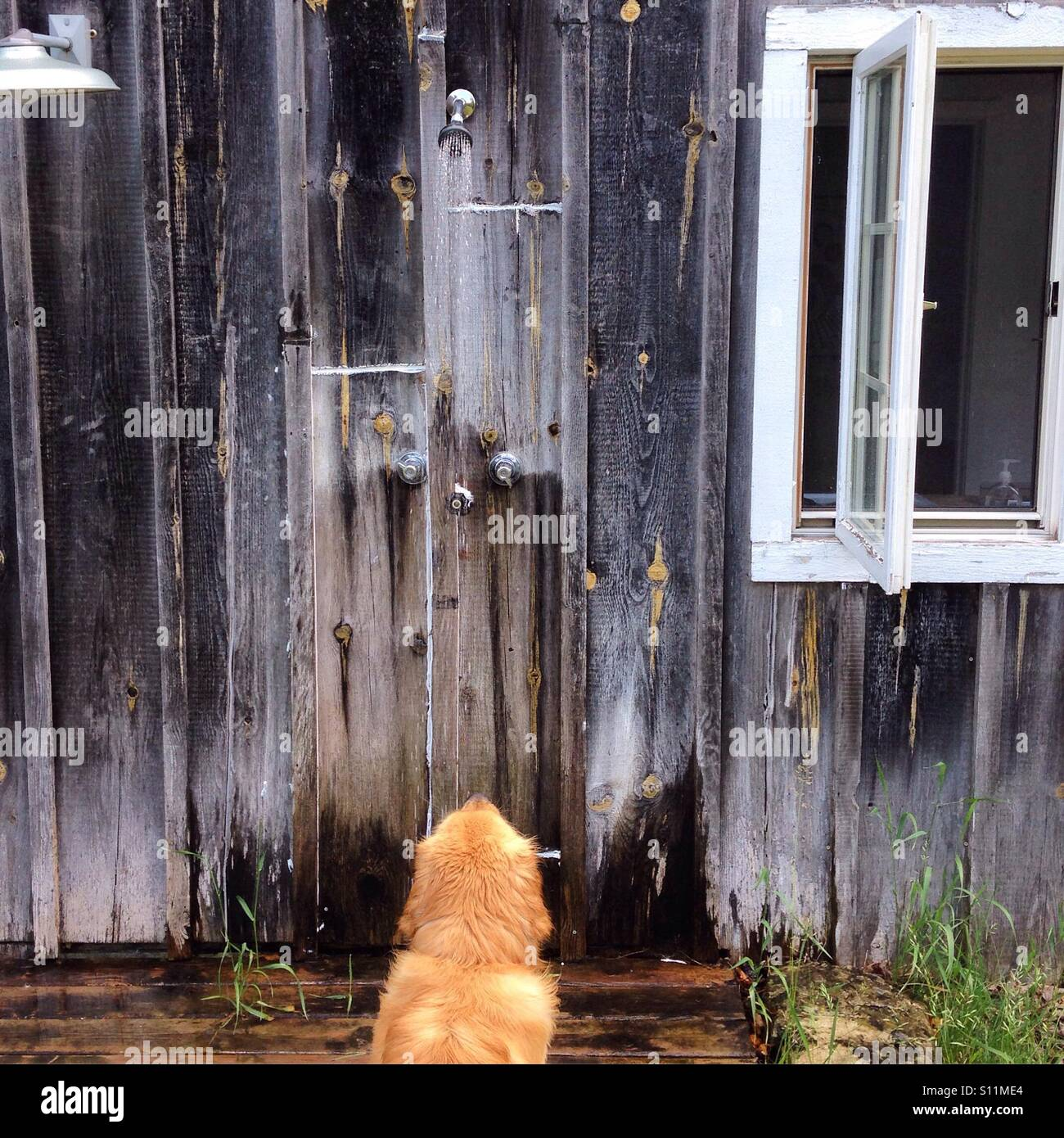 Outdoor Shower With Dog