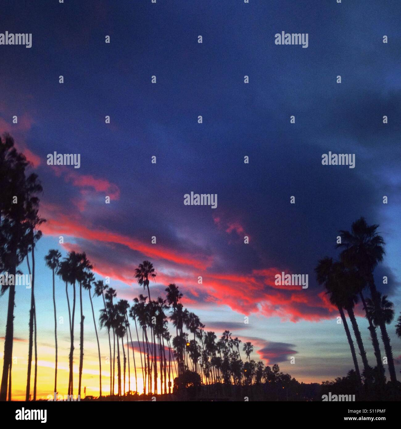 Sunset clouds above palm trees - Stock Image