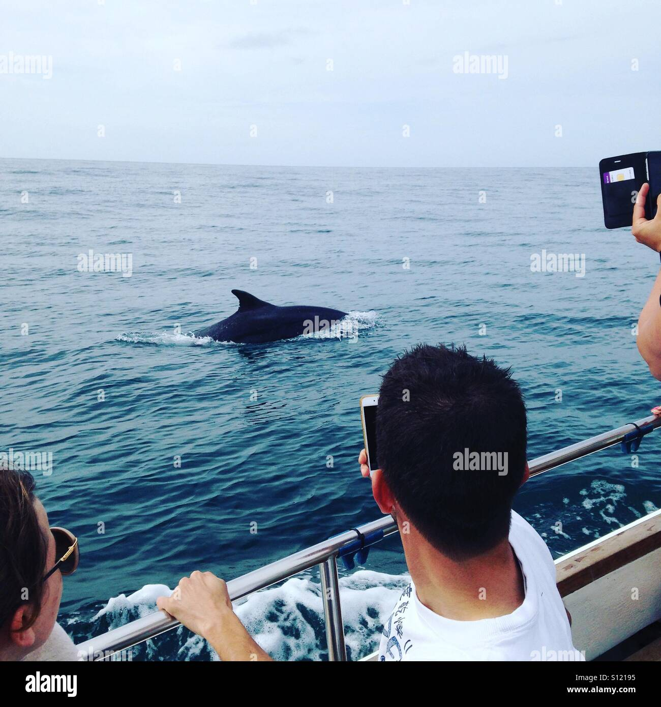 Dolphin spotting from boat - Stock Image