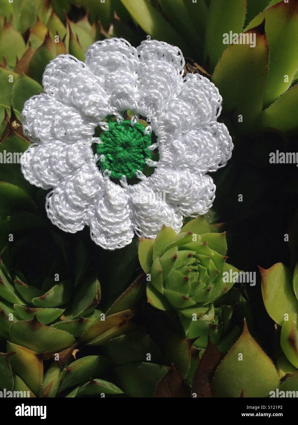 Srebrenica flower. Don't forget! - Stock Image