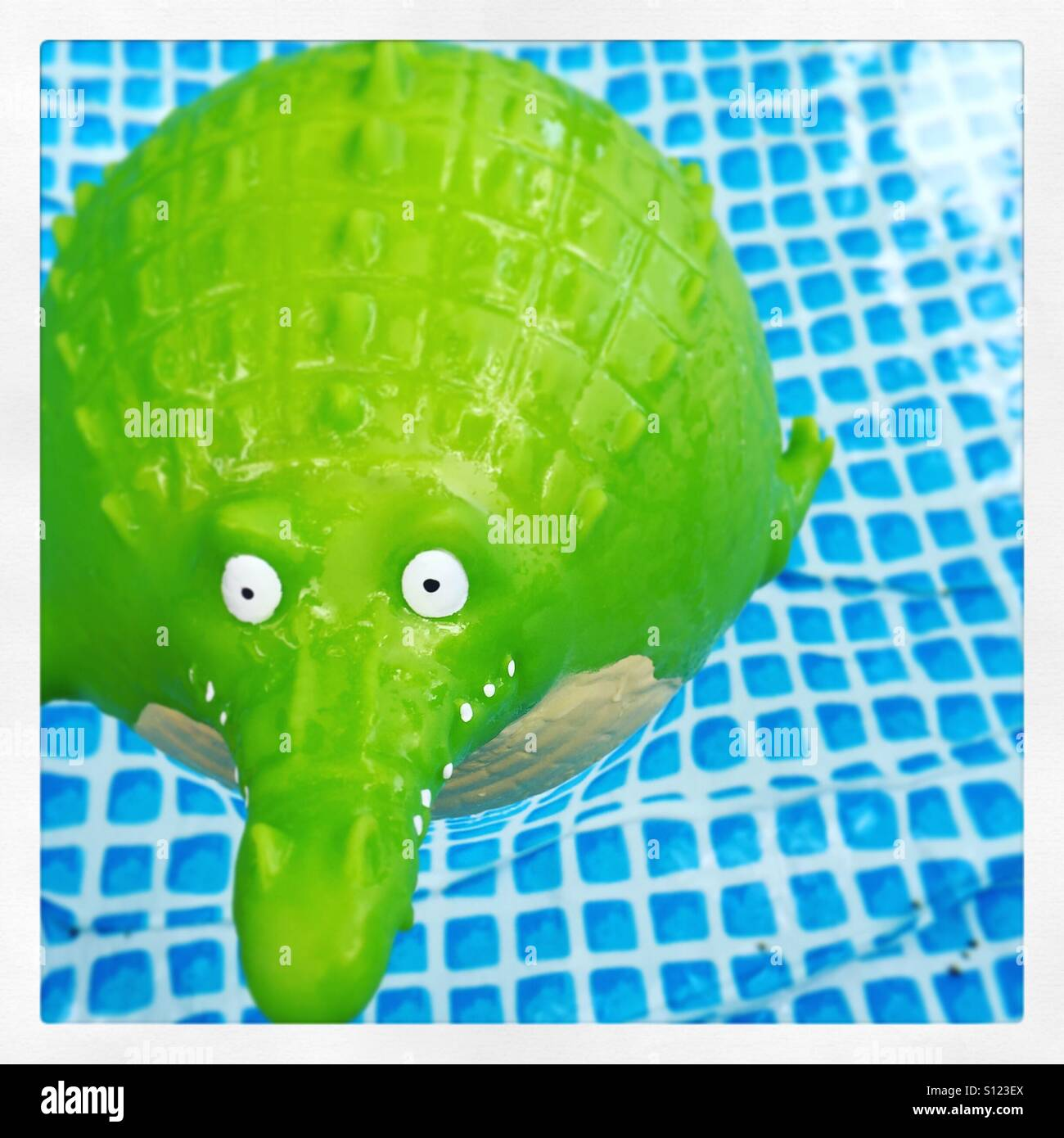 Croc In the pool - Stock Image