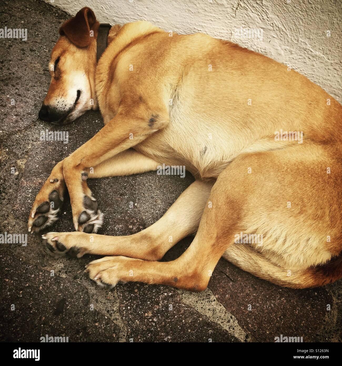 Sleepy old dog - Stock Image