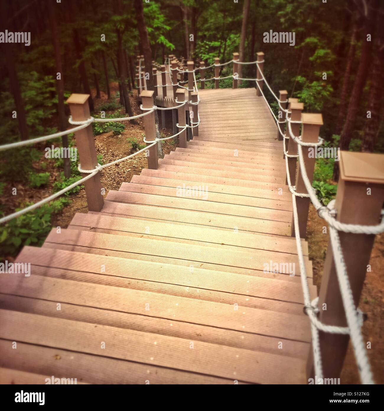 Wood Stairs In Forest   Stock Image