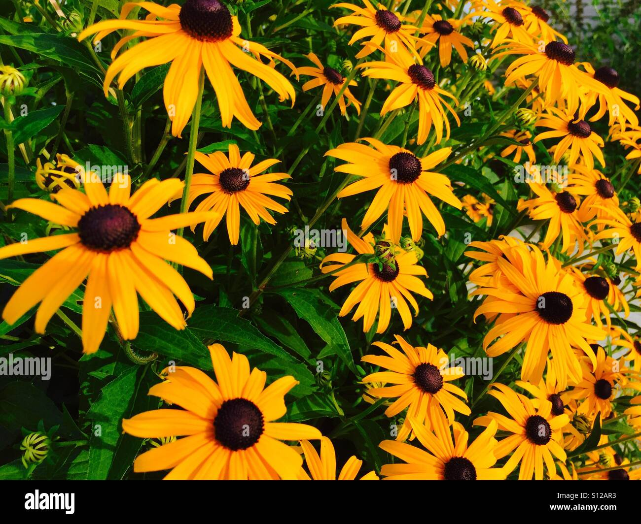 a769614f857b Yellow Maryland Stock Photos   Yellow Maryland Stock Images - Alamy