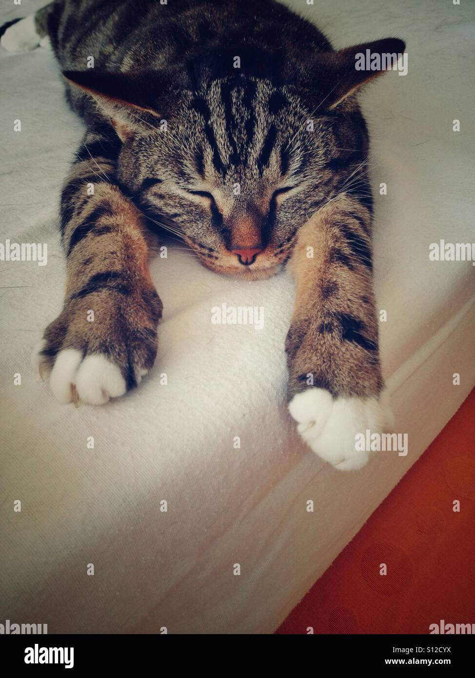 Tabby cat dozing with legs stretched out. - Stock Image