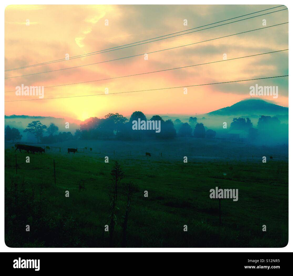 Sunrise over a cow field - Stock Image