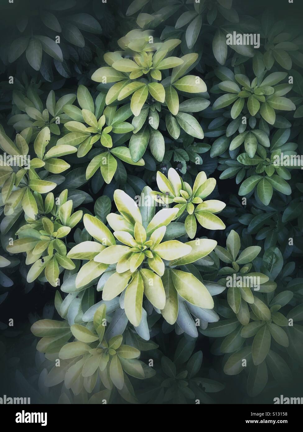 Summer foliage strong vignette and muted tones - Stock Image