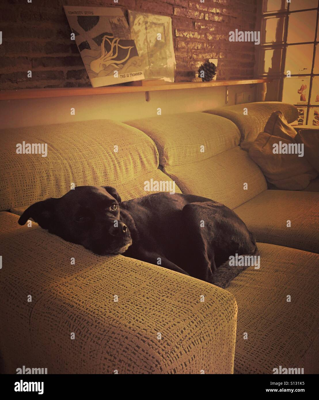 Puppy Afternoon Siesta - Stock Image