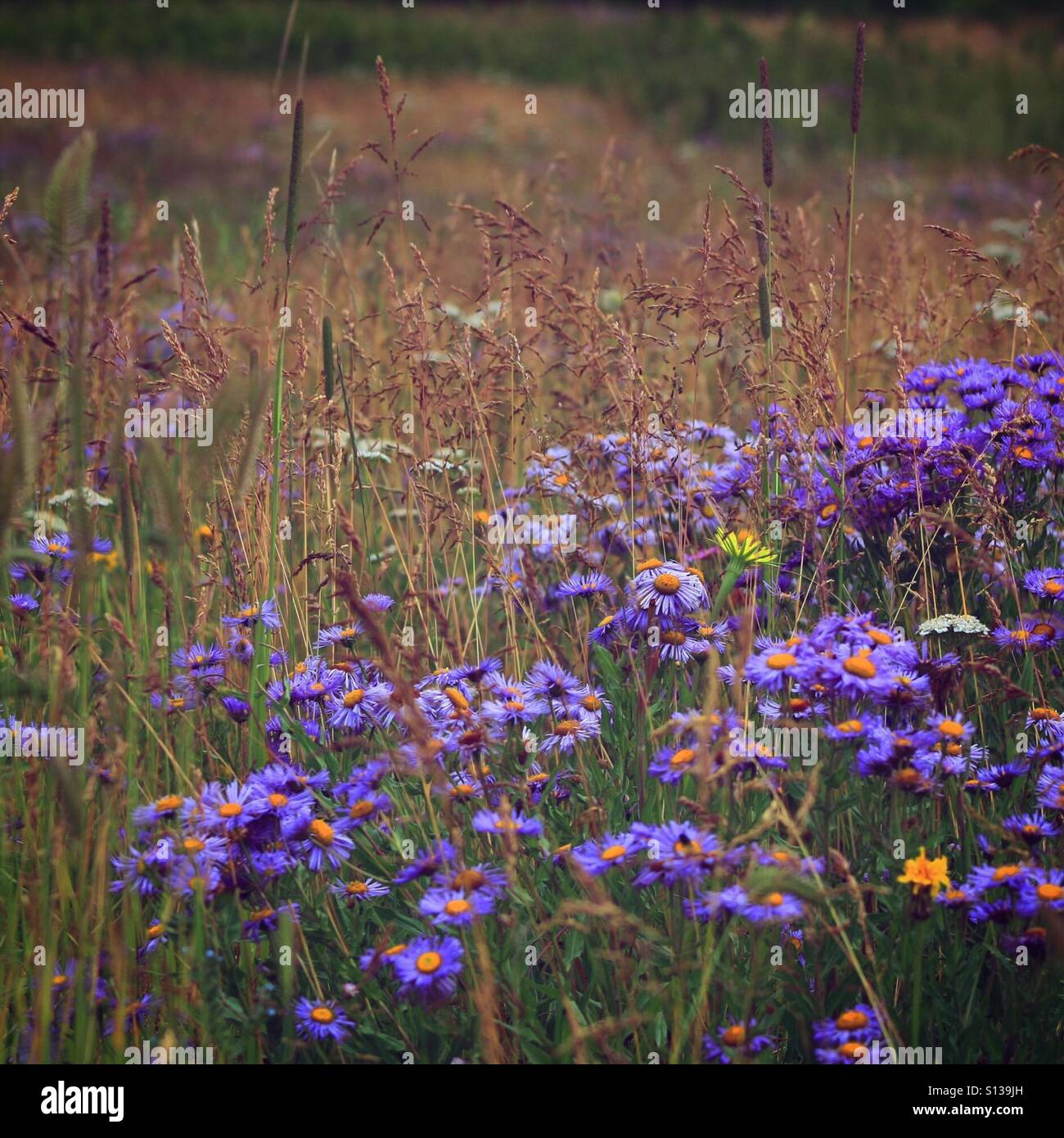 Wild Flowers Forever - Stock Image
