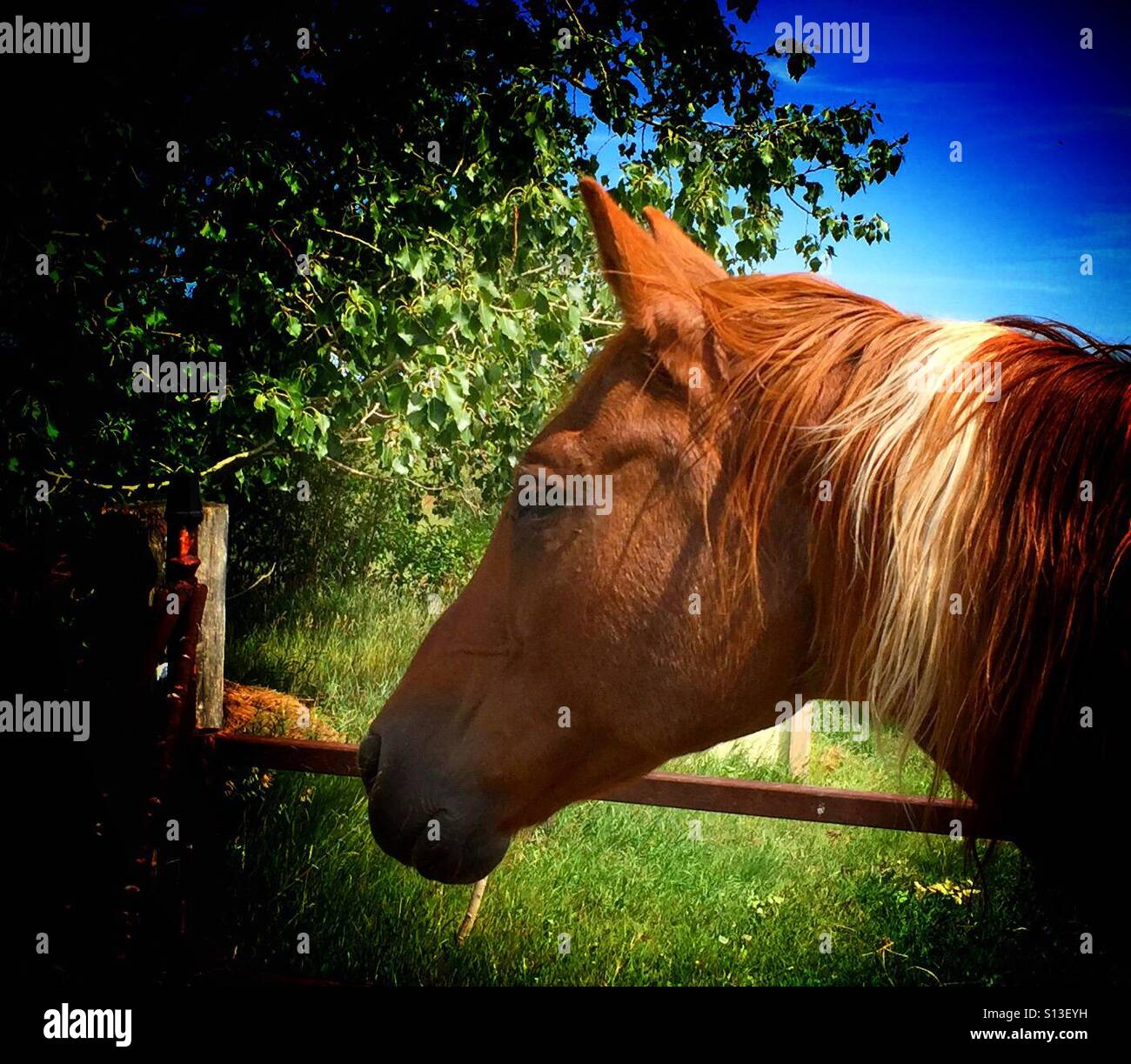 Friendly fellow - Stock Image