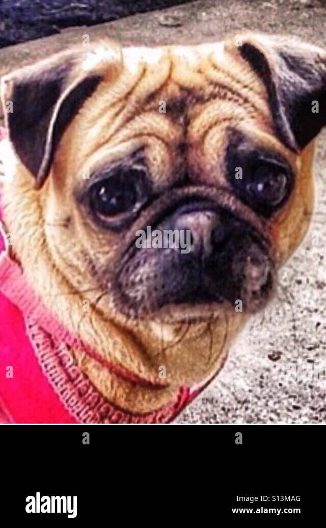 Dog face - Stock Image