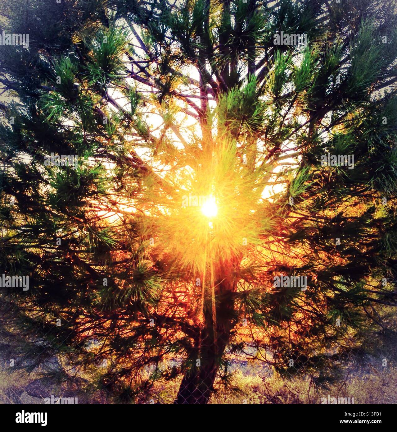 Sunlight and rays near to sunset through a pine tree. There is a spiritual, guiding light, uplifting feel to the - Stock Image