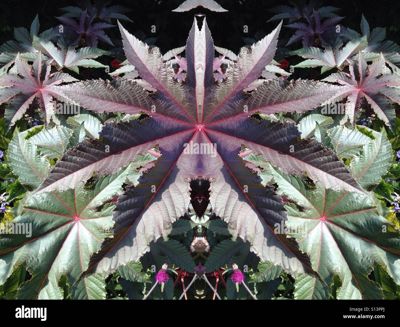 Photo manipulation of an interesting leaf - Stock Image