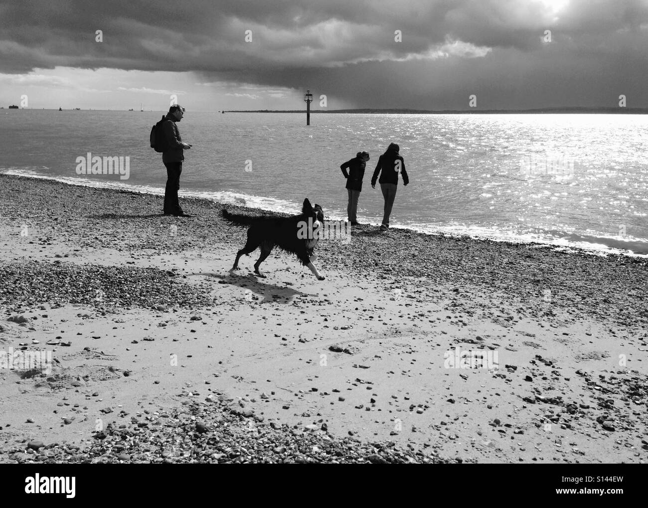 Dog running free on a stormy beach - Stock Image