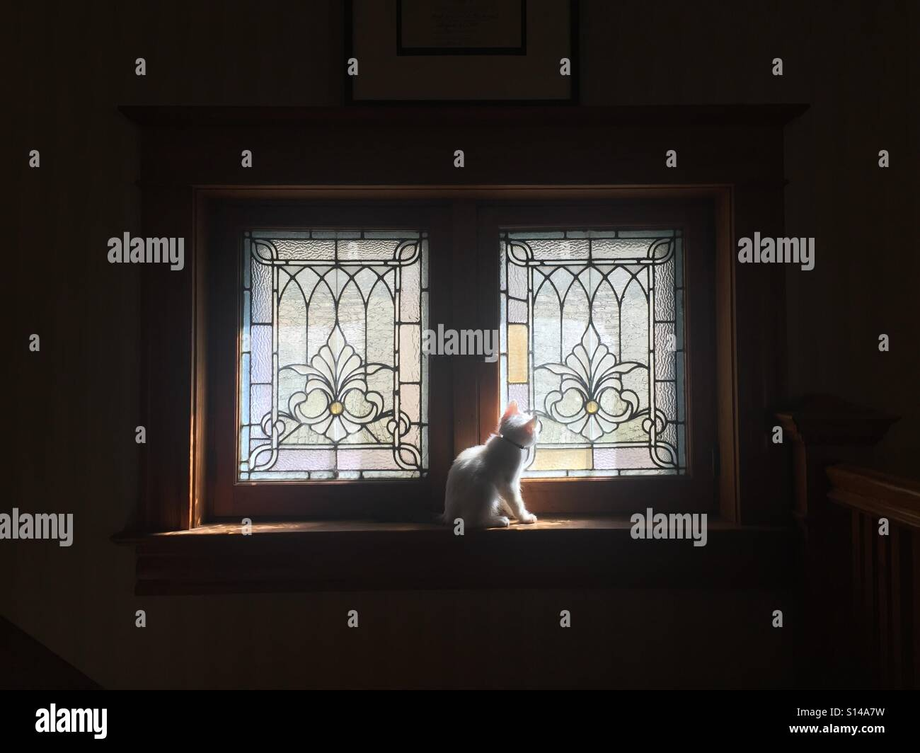 A white kitten sits in front of a stained glass window in pretty light. - Stock Image