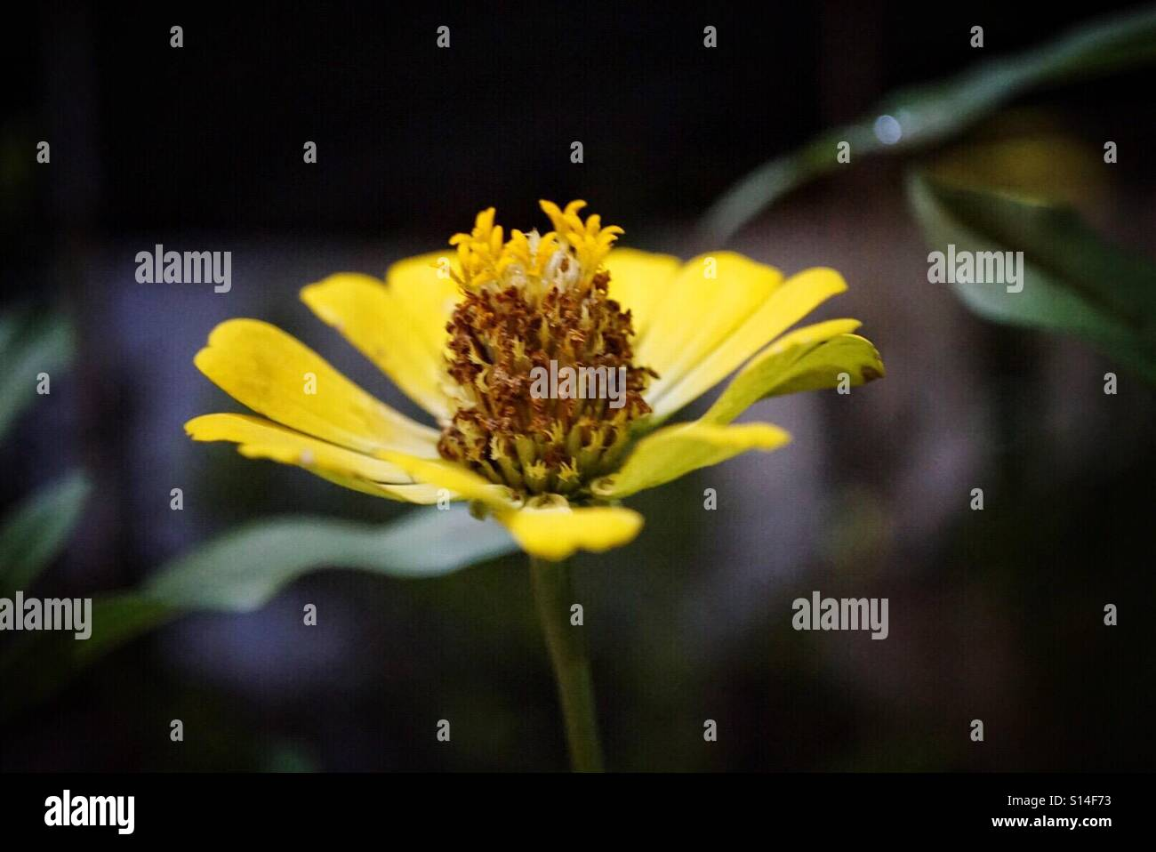 Yellow in the night - Stock Image