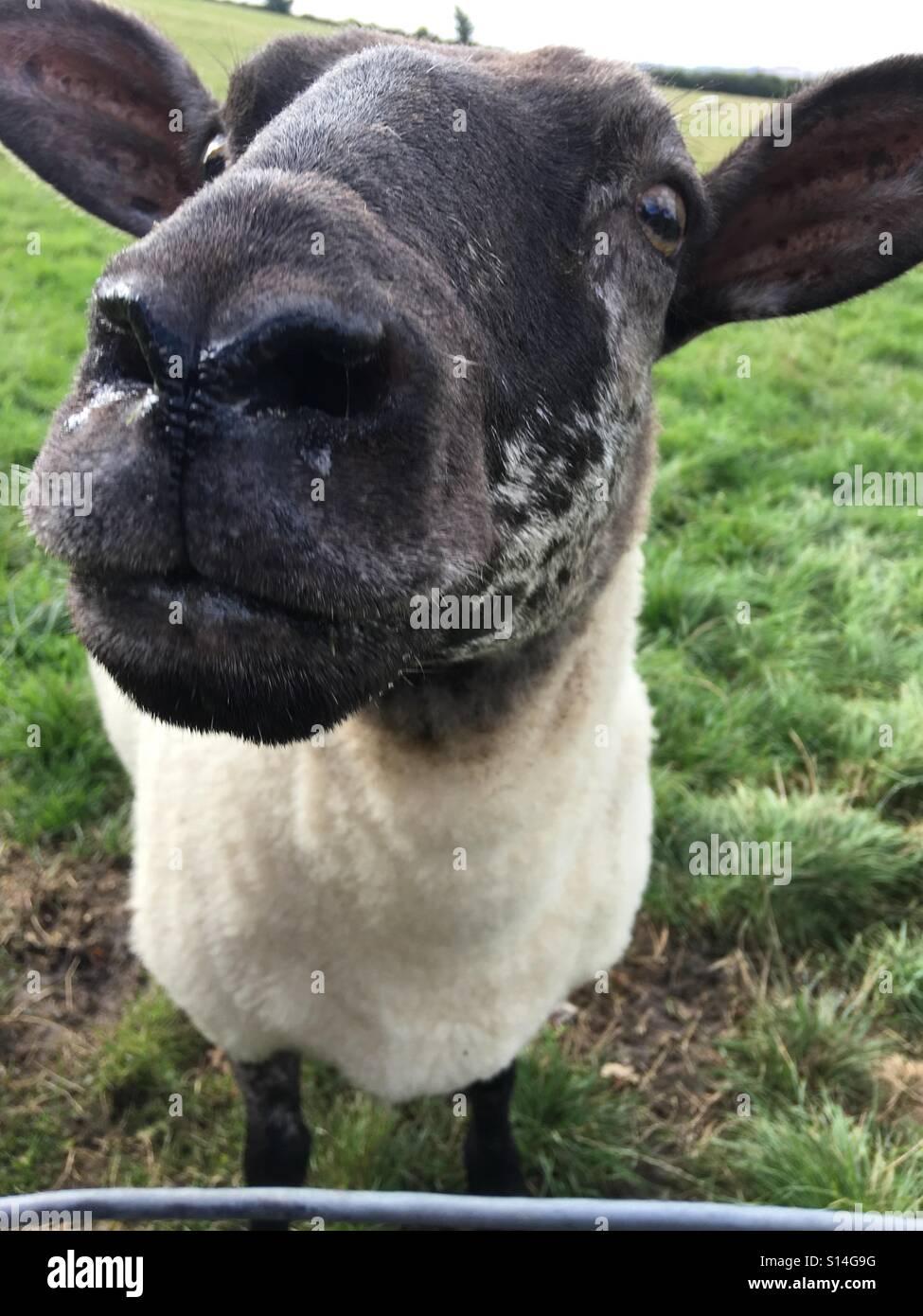 Runny nose Stock Photo: 310501900 - Alamy