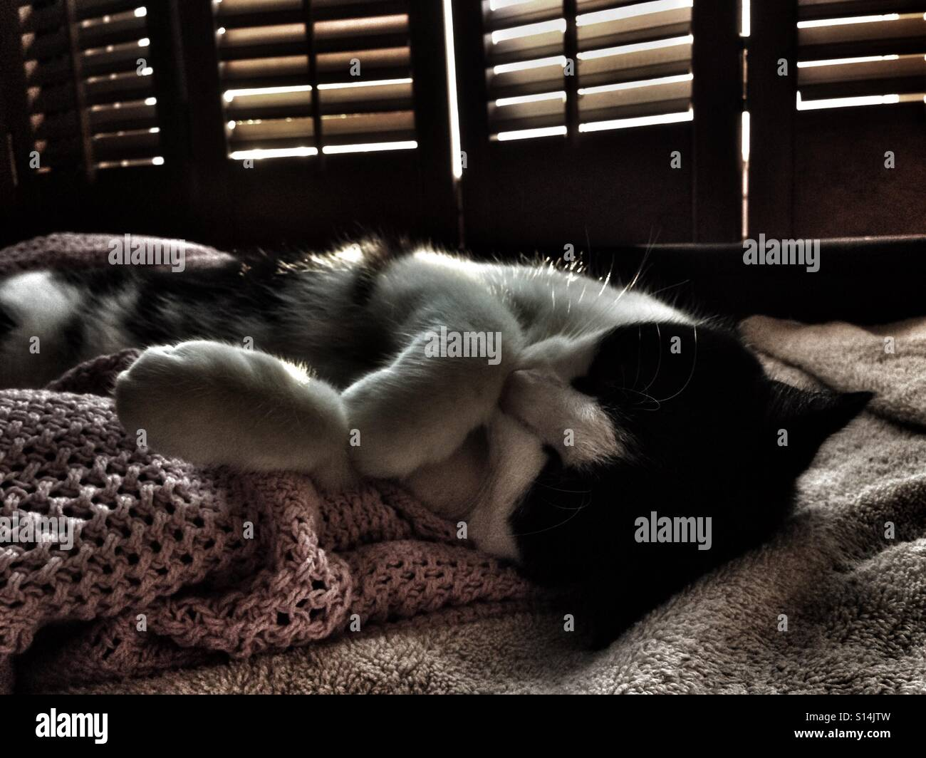 Cat napping by a window - Stock Image