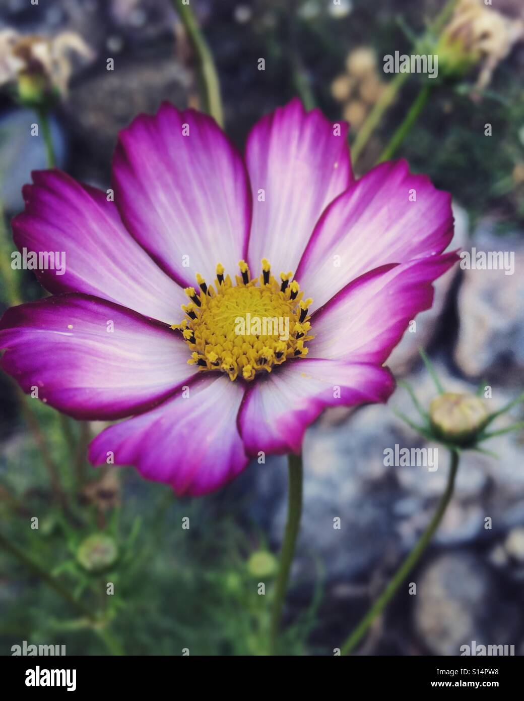 Pretty Pink Flower Stock Photos Pretty Pink Flower Stock Images