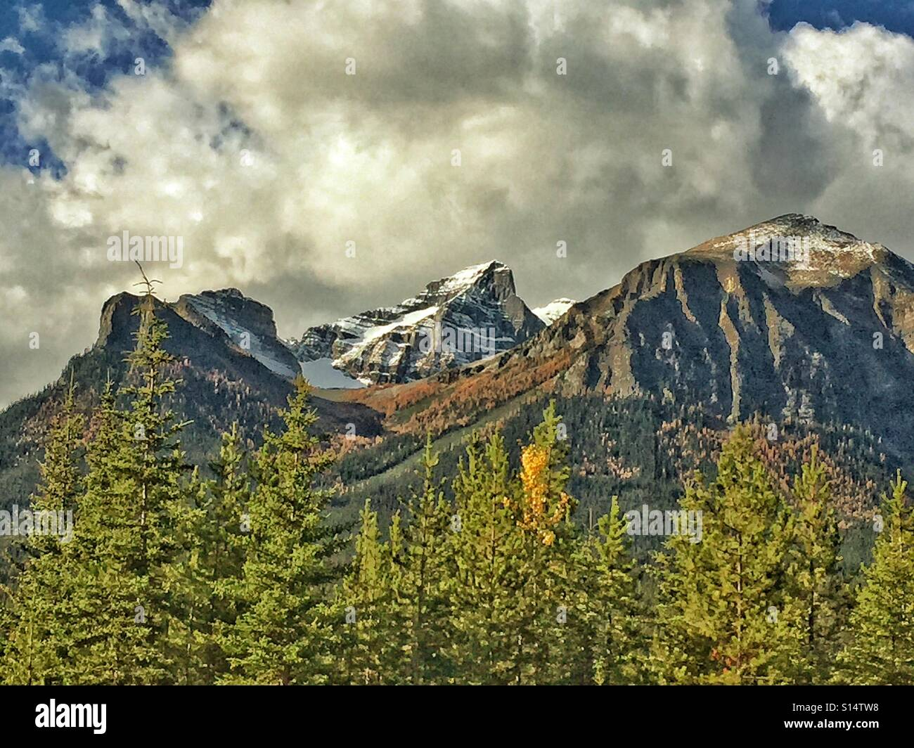 Larches in Autumn in Banff National Park Stock Photo