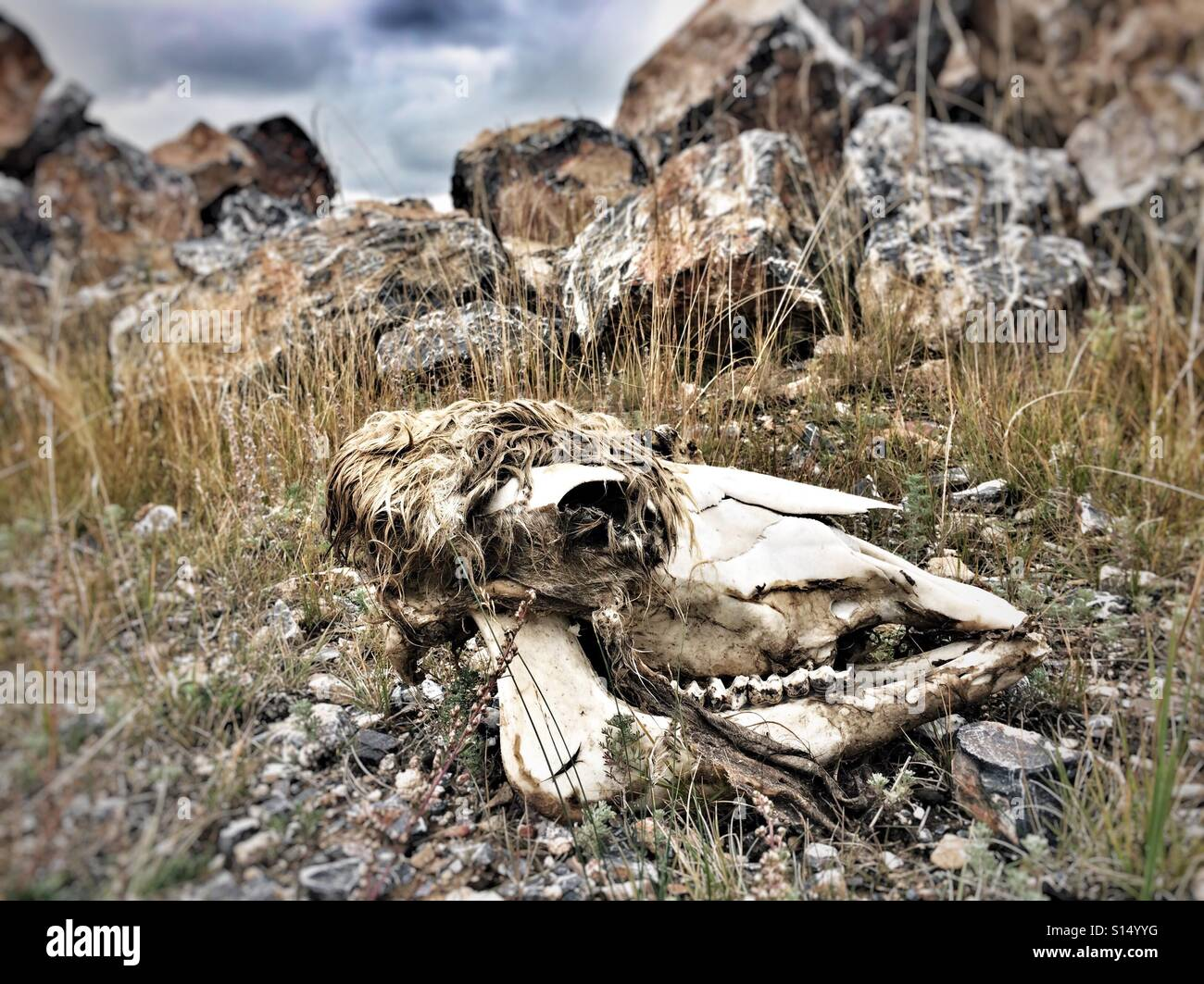 Death in the grassland - Stock Image