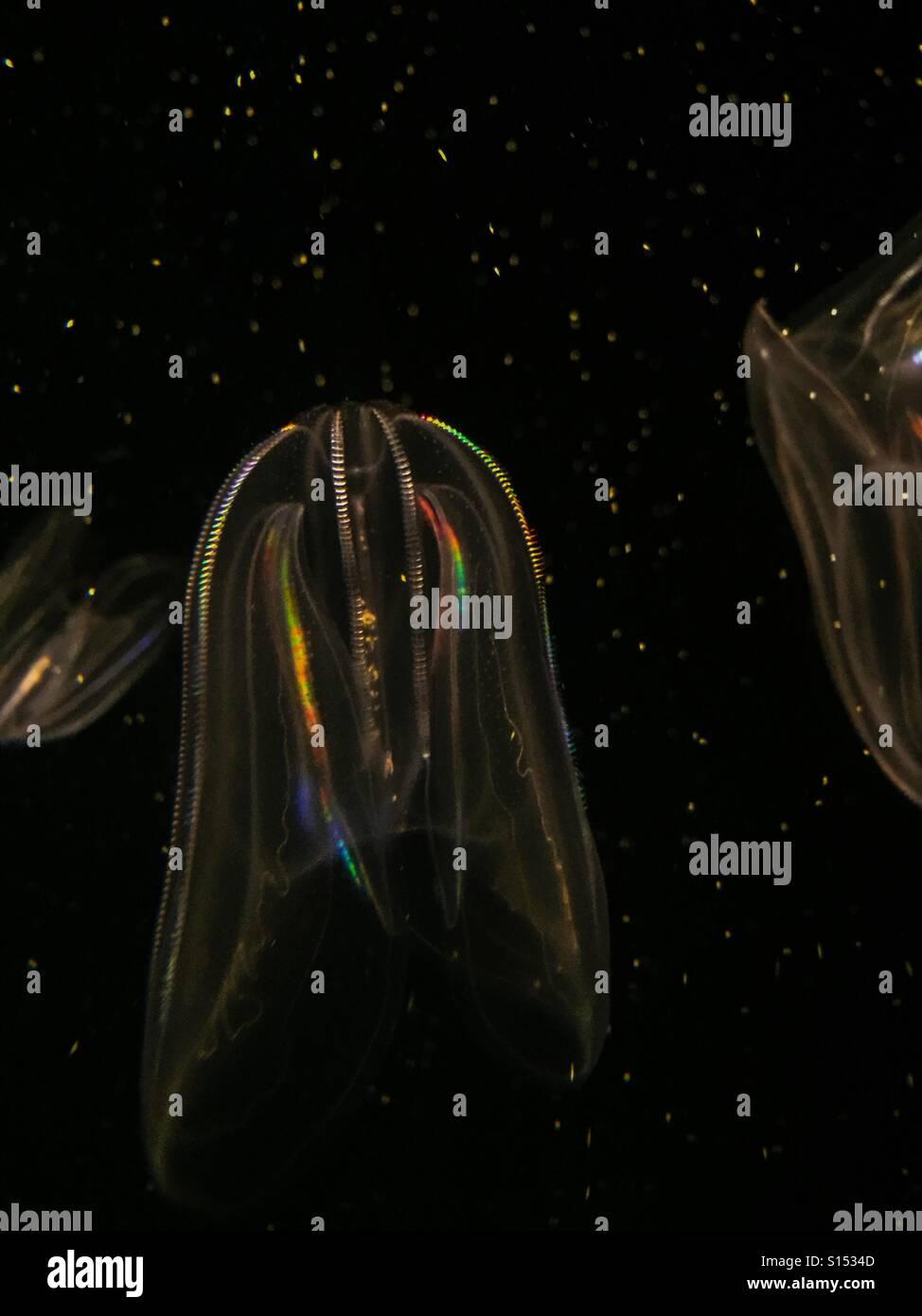 Luminous jellyfish - Stock Image