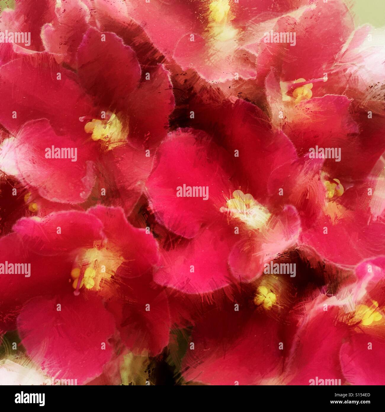 Pink flowers with a painterly effect - Stock Image