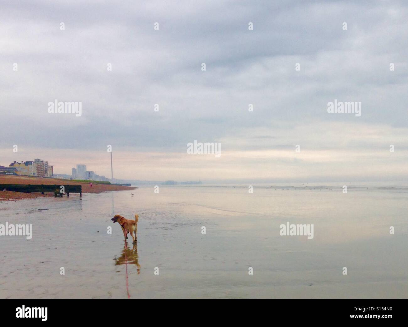 Brighton beach at low tide - Stock Image