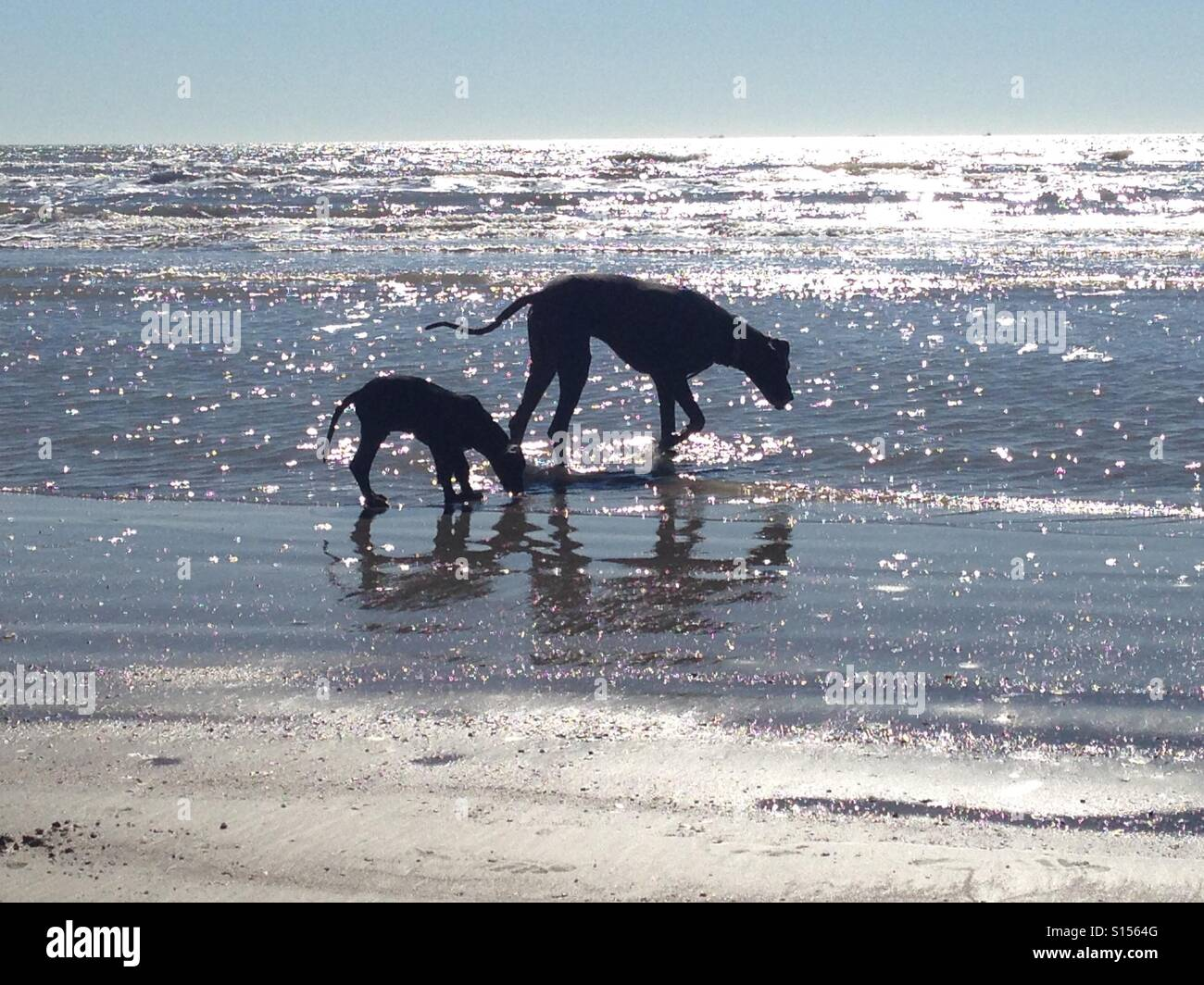 Danes at the Beach - Stock Image