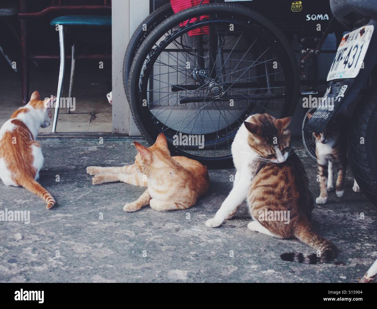 Counting how many cats in the photo. - Stock Image