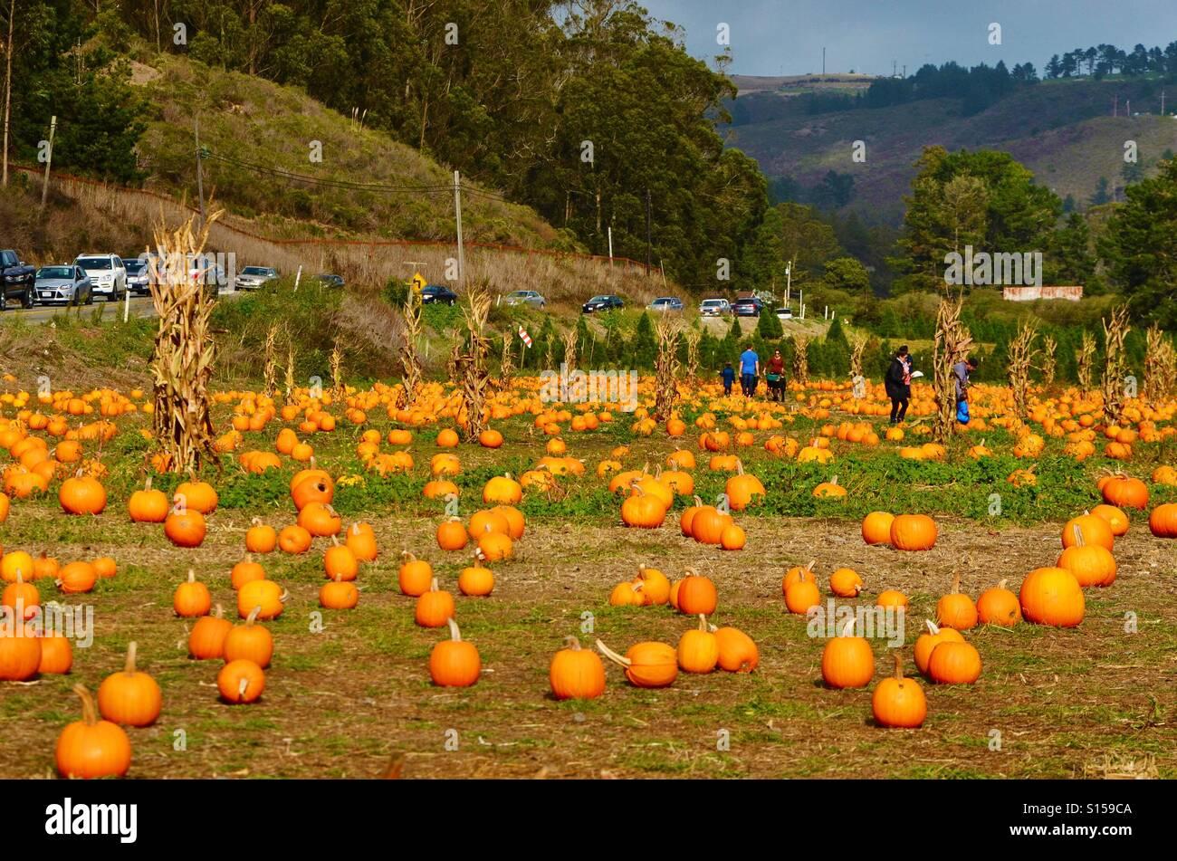 Half Moon Bay Pumpkin Festival 2020.Autumn Pumpkin Patch California Stock Photos Autumn