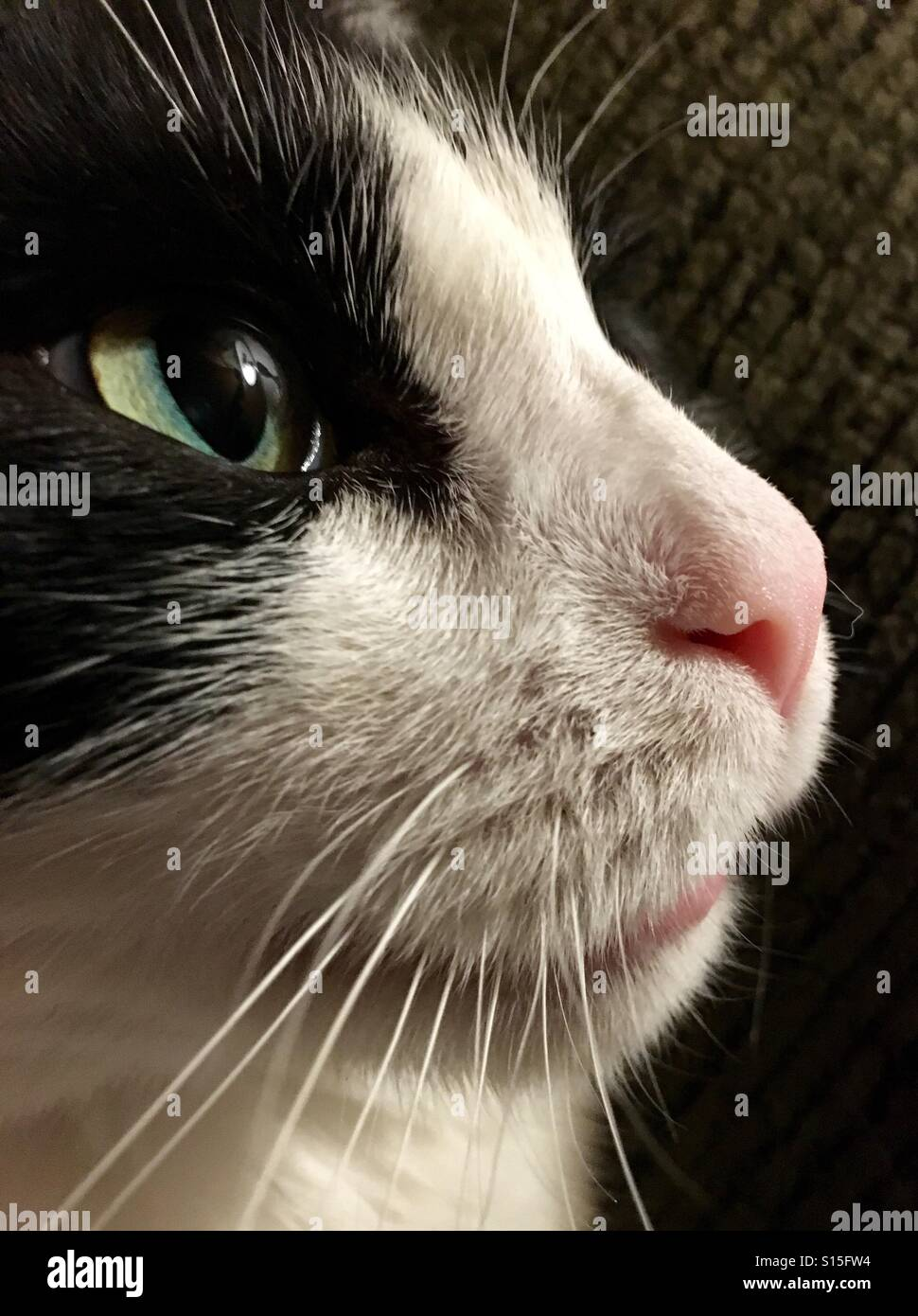 Cat face - Stock Image