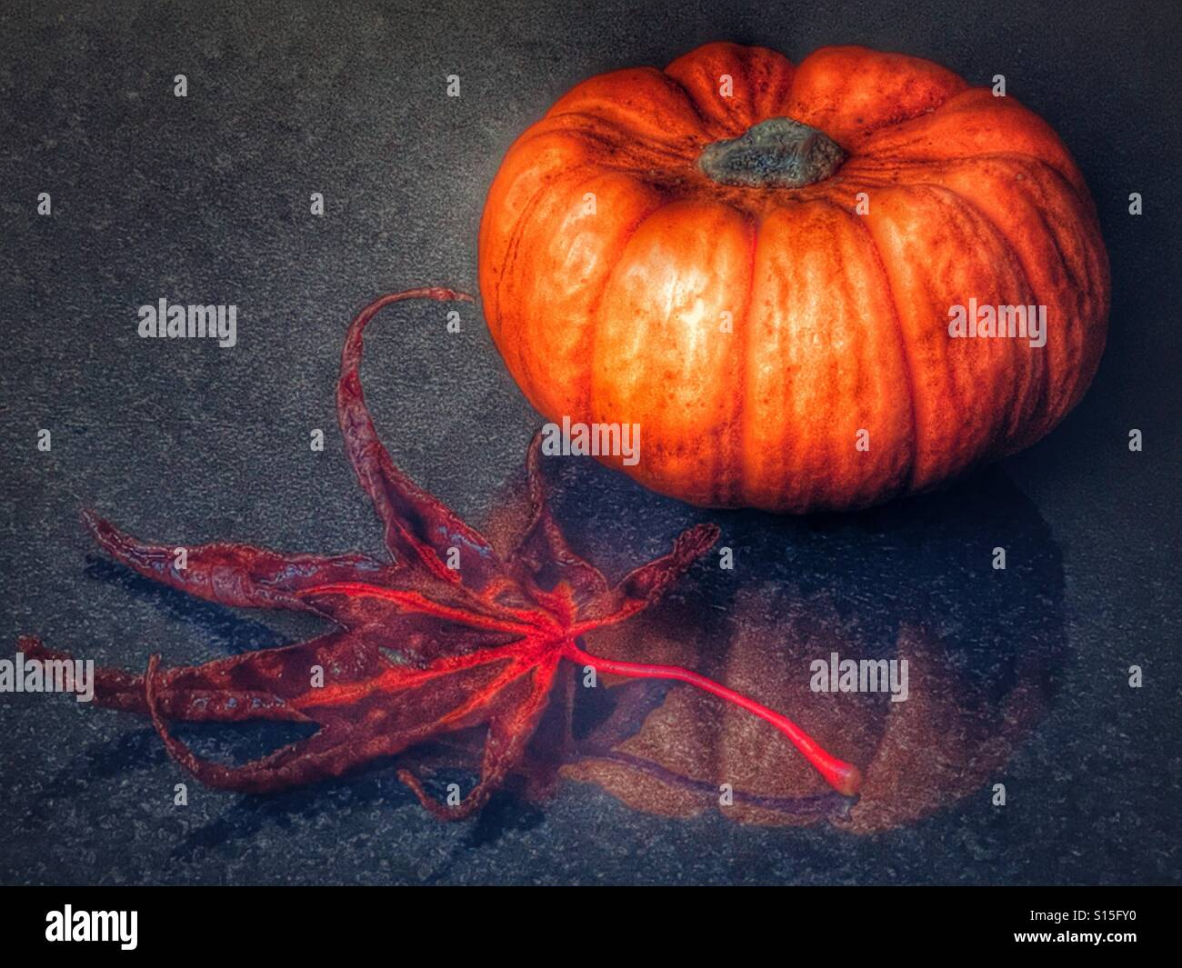 Munchkin pumpkin and red autumn leaf - Stock Image
