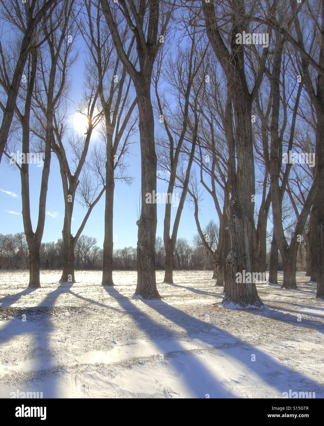 Winter trees in field - Stock Image