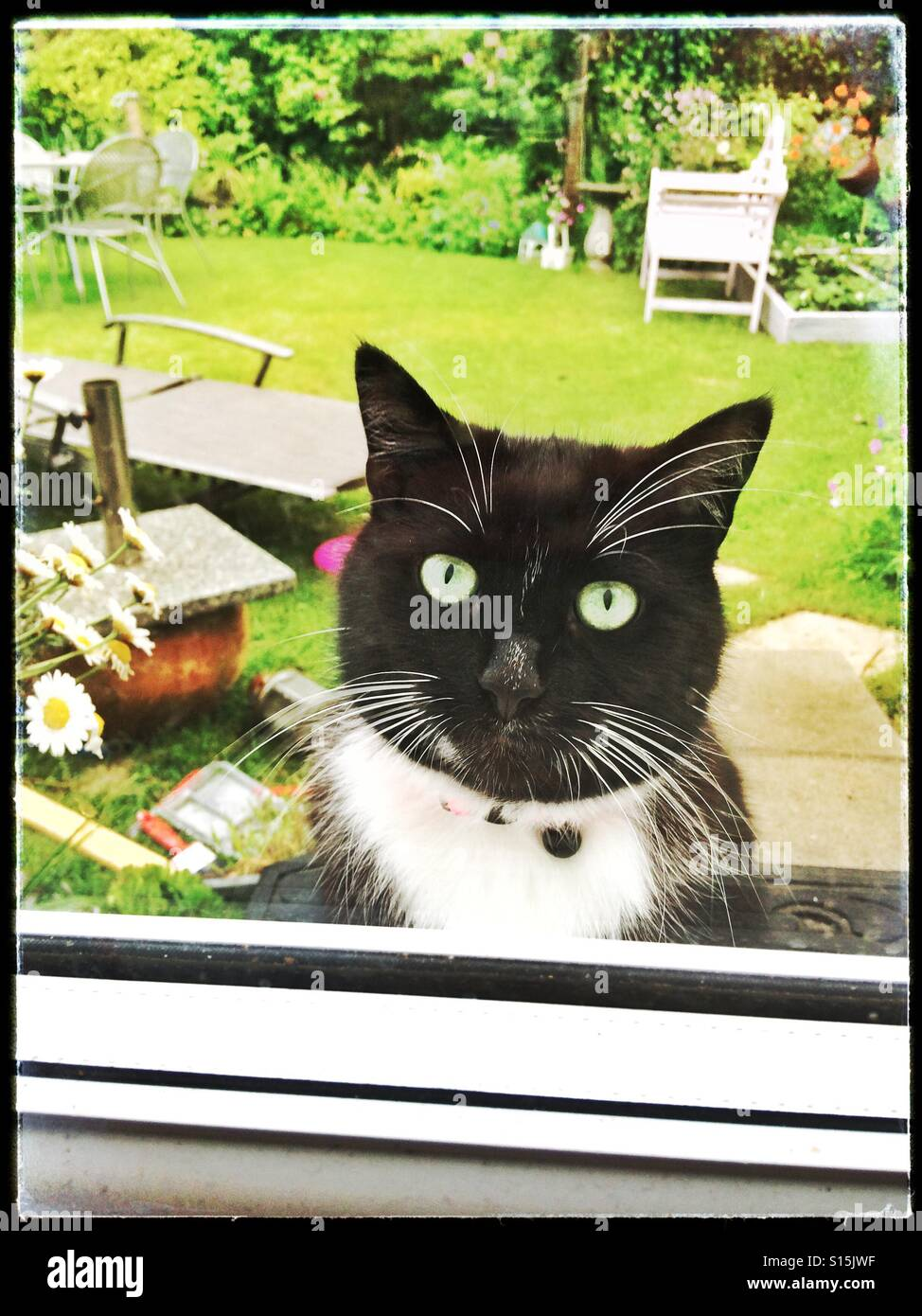 Cat waiting outside a double glazed door waiting to be let in Stock Photo