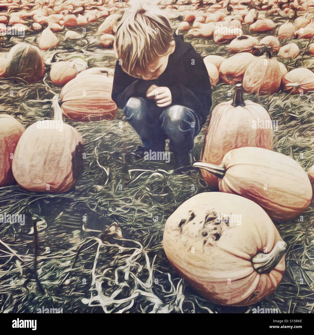 Kid in a pumpkin patch - Stock Image